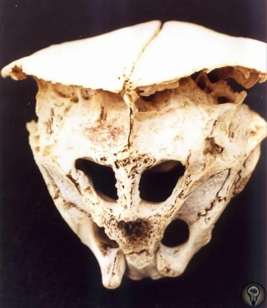 Древний череп, происхождение которого вызвало много вопросов Загадочный череп обнаружили в 2001 году, но история обнаружения этого черепа, не менее удивительна, чем сам череп.Мужчина, который