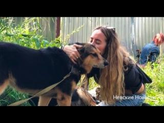 Бездомные животные в Новгородской области будут чипированы