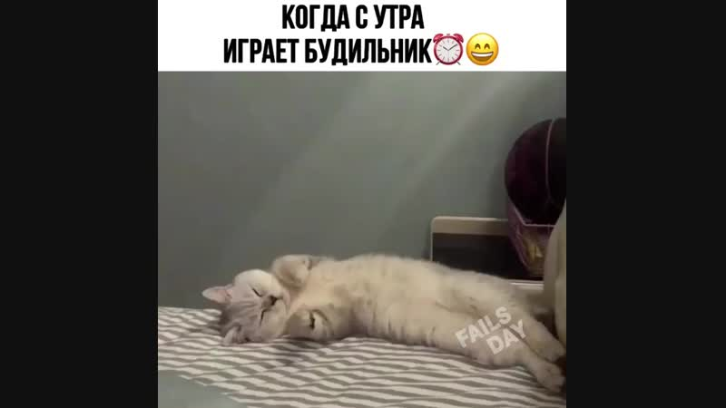 когда с утра играет будильник 😄