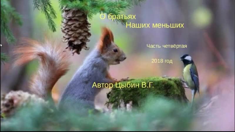 О БРАТЬЯХ НАШИХ МЕНЬШИХ часть 4 автор Цыбин В. Г.