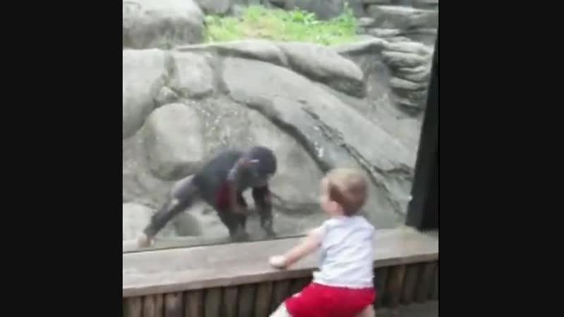 Забавное посещение зоны зоо!