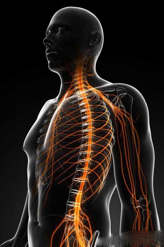 Нейротоксины негативно влияют на нервную систему.