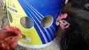 Comedero económico para gallinas sin desperdicio de comida Cheap hen feeder without food waste