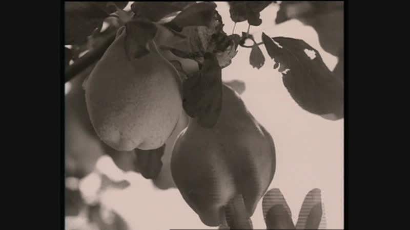 Enigma - Return To Innocence (Baseclips.ru)