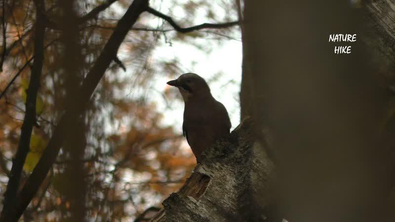 Один день в осеннем лесу jlby ltym d jctyytv ktce