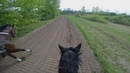 Gallop Sparing with FAST Speed average 55 Km H GOPRO 5