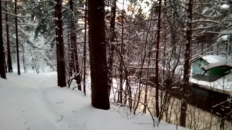 Зимний лес Сестрорецкий курорт 2019