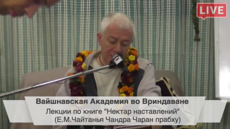 Дмитрий Толкачев - live