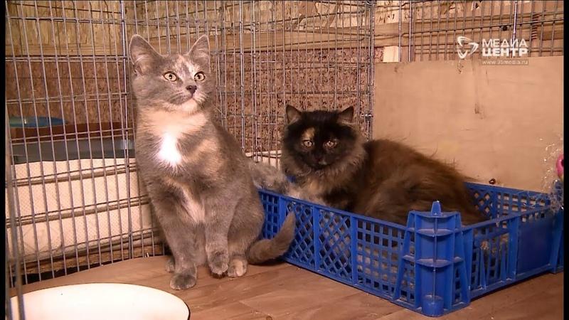 Рекордное количество кошек и собак подкинули в череповецкие приюты этой осенью