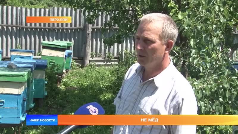 В Мордовии массово гибнут пчёлы.