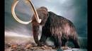 МАМОНТ: Воскрешение из мертвых   Как воссоздать вымершее животное