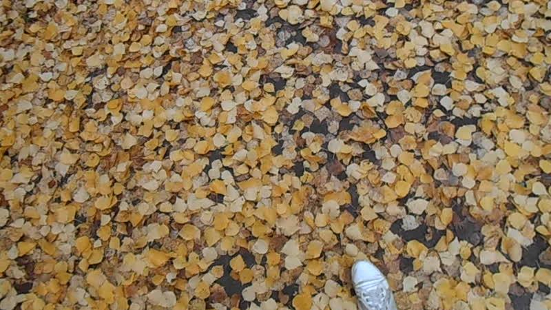 Под дождём. Ковёр листьев! 19.10.18.