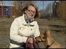 Специальный репортаж «Волонтеры Ярославля обучают бездомных собак служебным командам» от 24.09.18