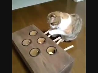 Как надолго занять кота