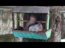 Волосово парк Велес Кто рано встает к тому белочка приходит