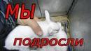 КОРМЛЕНИЕ крольчат. день 15