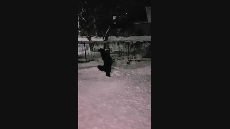 Игра в собачку :-)