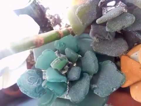 Succulent echeveria collectible figurine, sea stained glass,
