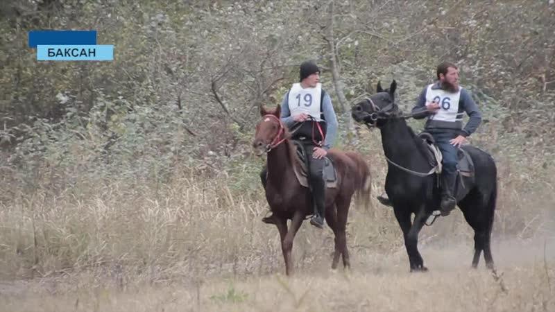 Баксан/ежегодные дистанционные конные пробеги на лошадях кабардинской породы ... октябрь 2018 года ...