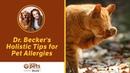 Общие советы для животных-аллергиков / Holistic Tips for Pet Allergies