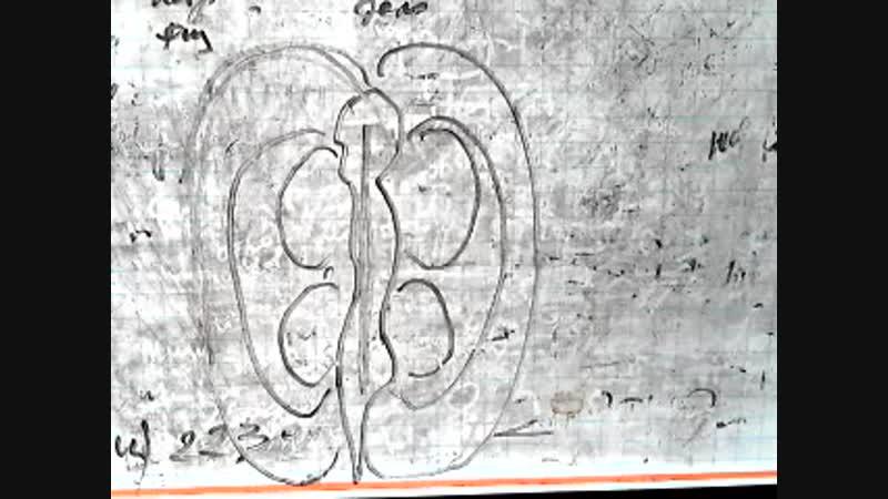 Video 5224. профили эниологии и йоги