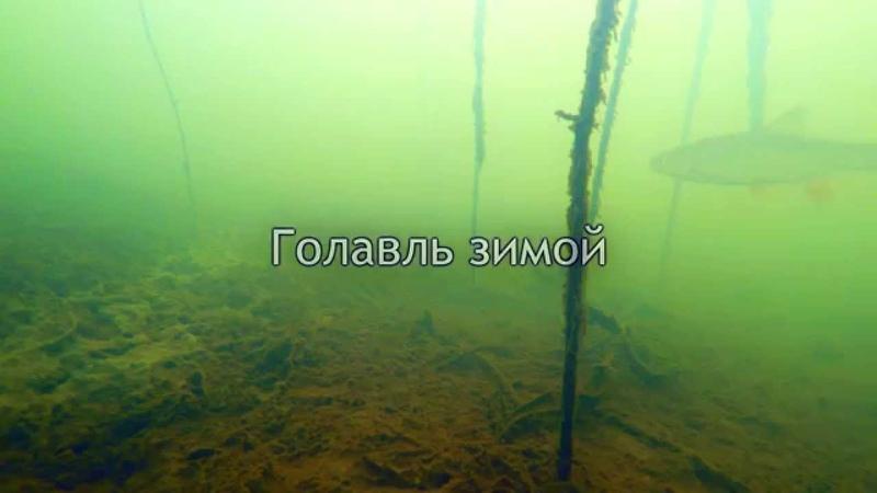 Голавль Зимой, Подводное Видео