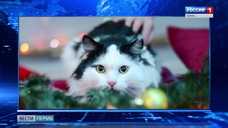 В приюте «Матроскин» устроили новогоднюю фотосессию для бездомных котиков