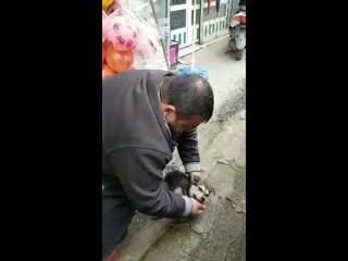 Продавец магазина в Турции спас щенка