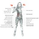 Пожалуй, ни одна тренировочная программа не обходит стороной мышцы живота, но иногда качать пресс на