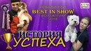 Груминг История успеха ВолгаГрум 2018 отголоски