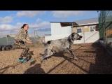ПРОДАЖА. Тумар Олтын Ахтар (Хан Орда Нукер & Диляра) - 11 мес. http://www.beliy-lekar.ru