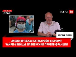 Экологическая катастрофа в Крыму, чайки-убийцы, Павленский против Франции