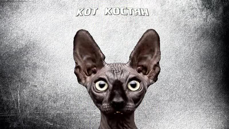 Одичалые патриоты - Кот Костян