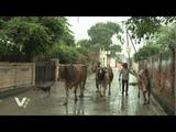 Немного лирики. Сезон дождей во Вриндаване.