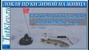 Ловля щуки зимой на живца. Зимняя рыбалка 8 января 2019г. Пруд Скупая Потудань.