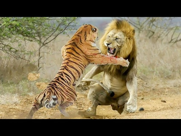 WWE Great Lion vs Under Tiger 😄 This is Awesome