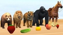 Matching Baby Animals Play Indoor Playground With Mother Animals And Fruits Animals Colors