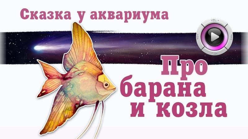 Аквариум Сказки у аквариума Про барана и козла