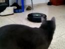 Кот и робот пылесос первая реакция iRobot