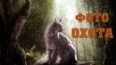 Hidden Animals Photo Hunt ► ФОТООХОТНИК