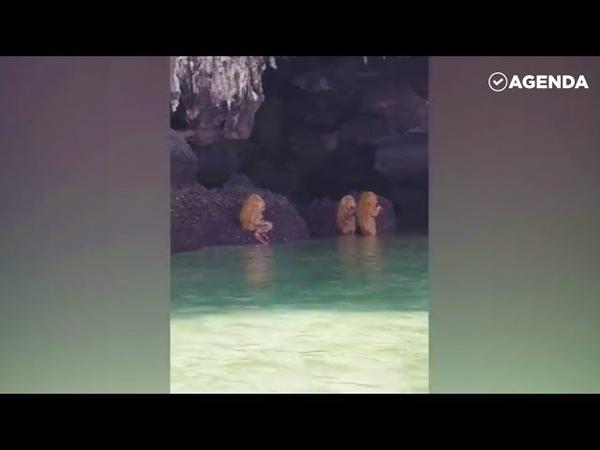 Туристы засняли неизвестных существ Ewok Like Troll Monkeys On Thai Island