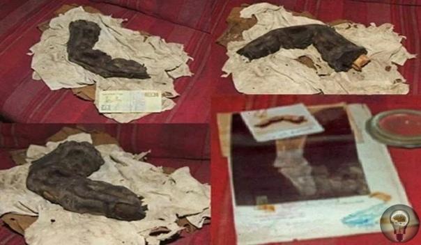 38-сантиметровый палец из Саккары может быть свидетельством существования великанов