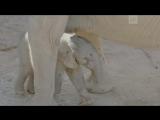 Слоненок окрасом точь-в-точь как у мамы появился на свет в Сан-Диего