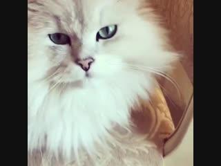Котик Волочковой