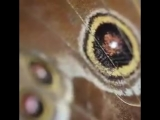 рождение butterfly и её первый полёт