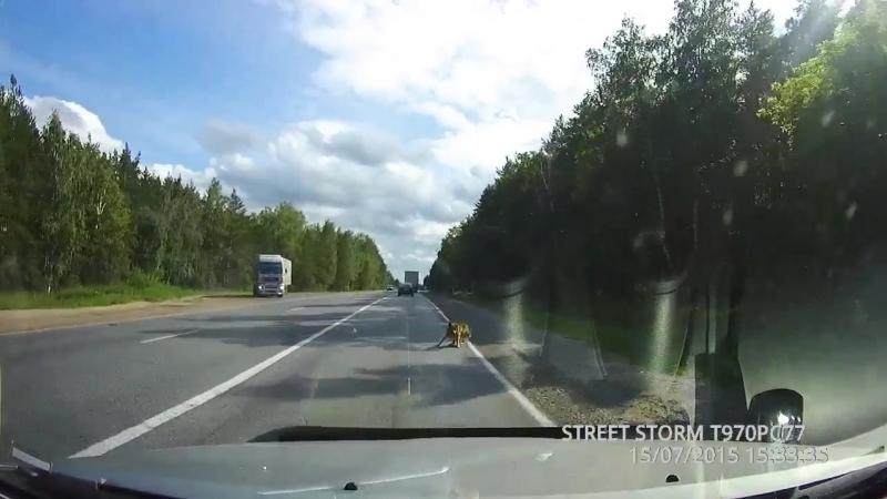 2015-07-15 Собачка