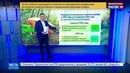 Новости на Россия 24 Начало грибного сезона кривая отравлений пошла резко вверх