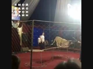 В Краснодарском крае львица напала на девочку в цирке_480p.mp4