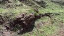 Мокрая Ольховка ДРЕВняя засыпанная пальмовая роща или яйца динозавров 01 05 2017