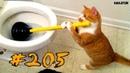 Смешные коты и котики 2019 приколы про котов до слез под музыку - Смешные кошки 2019 Funny Cats